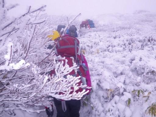 樹氷の中を進む